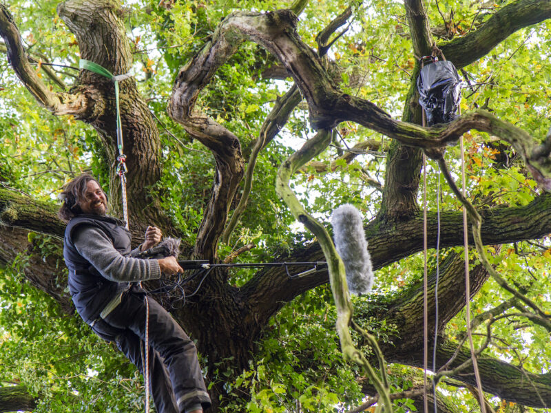 Photo of sound artist Thor, sitting in a climbing harness high up in an old oak tree. He is laughing as he holds a large microphone at arms length up into the trees canopy to capture the sound.